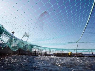 """Предложение на CEN за създаване на нов технически комитет """"Устойчиво рибарство, аквакултури и риболовни съоръжения"""""""
