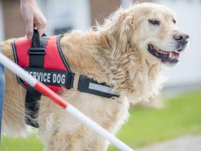 """Предложение на ISO за създаване на нов технически комитет """"Кучета-асистенти"""""""