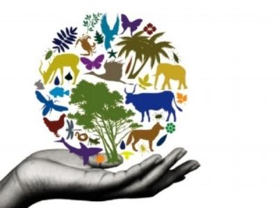 """Предложение на ISO за създаване на нов технически комитет """"Биоразнообразие"""""""